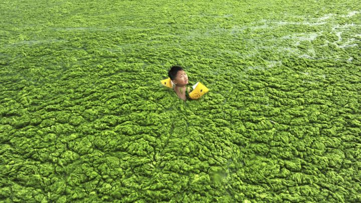 olympic algae